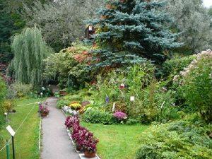 Botanical-Garden-of-Tver-State-University