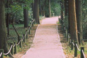 Hongneung-Arboretum