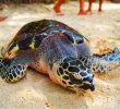 22 Tempat Wisata Di Guimaras Filipina Yang Wajib Dikunjungi