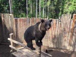 Zookompleks Three Bears