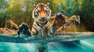 Asutralia zoo