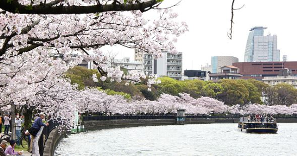 12 Tempat wisata di Osaka Musim Semi Wajib Dikunjungi