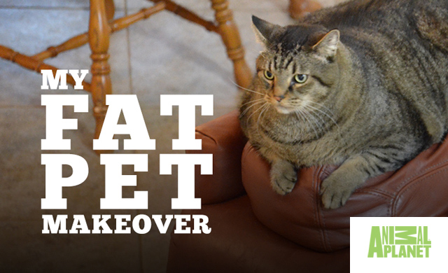 MY BIG FAT PET MAKEOVER