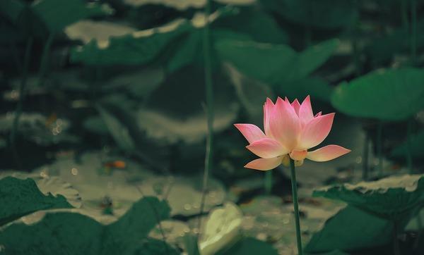 Thumb lotus