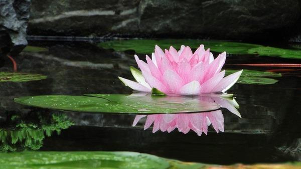 Thumb flower 2514519 960 720