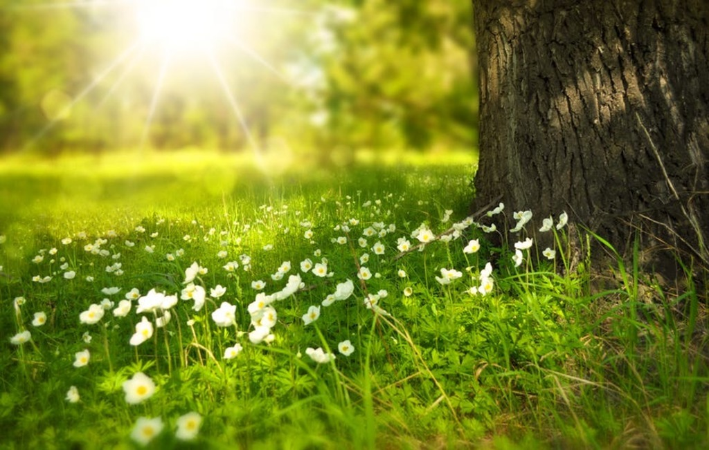 Spring tree flowers meadow 60006