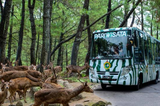 Taman Safari Indonesia, Bogor (Sumber: www.tripadvisor.com)