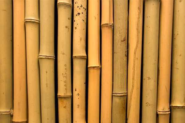 Bambu Sebagai Bahan Bangunan Arsitag