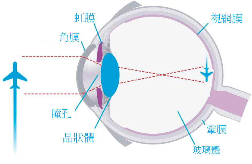Stock Vector Vision Optics Eyeball Visual System 140529202 1 Min Chinese