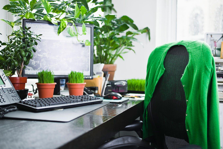 Tanaman Hias di Meja Kerja