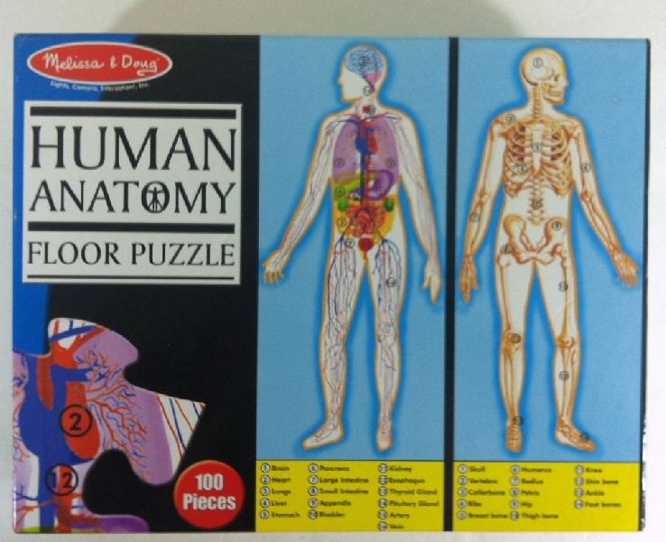 Human anatomy double-sided floor puzzle
