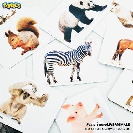 Jumbo flash card – สัตว์นานาพันธุ์
