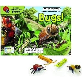 Junior groovies - bugs