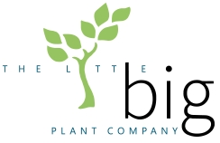 The Little Big Plant Company logo