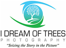 I Dream of Trees Photography Logo