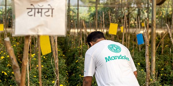 Mandala, Kemps Corner and Worli, Mumbai || Go Organic