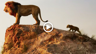 The Lion King Movie (Jul 2019)- Trailer, Star Cast, Release