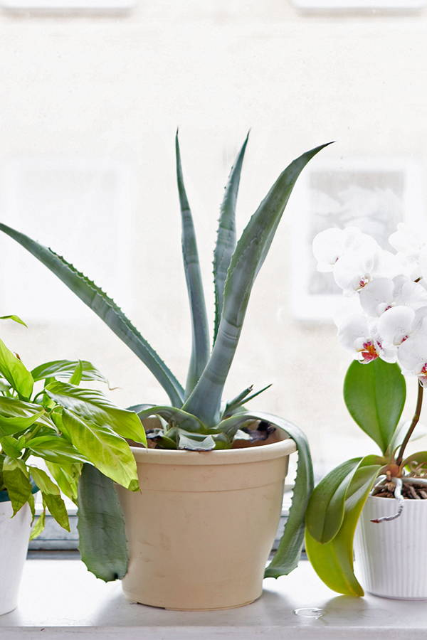 Let us Clear the Air on Which Plants can Make You Breathe Easy