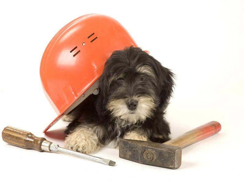 puppy with construction tools