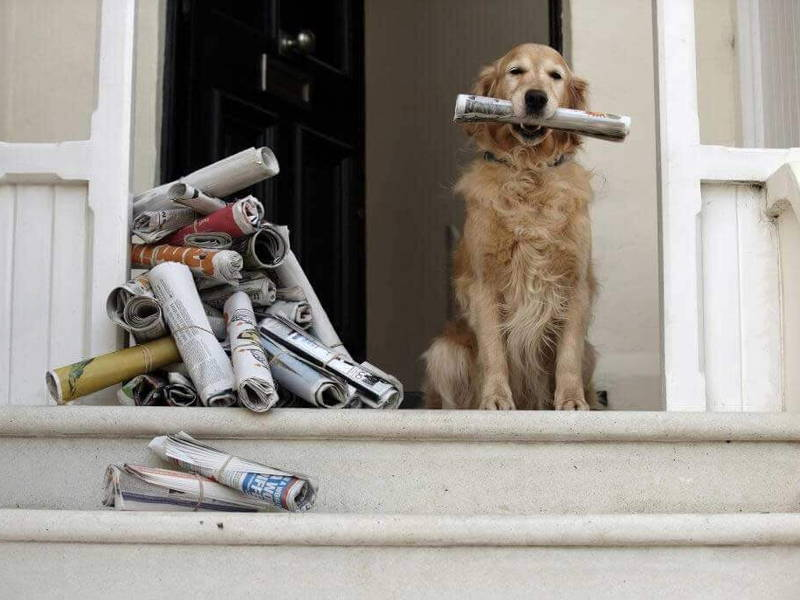 dog fetch newspaper