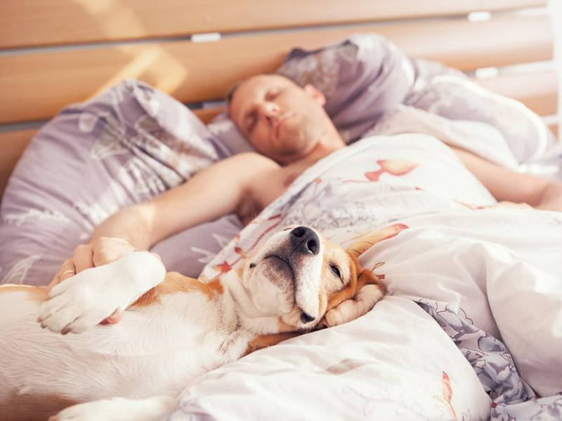 pets sleeping in bedroom