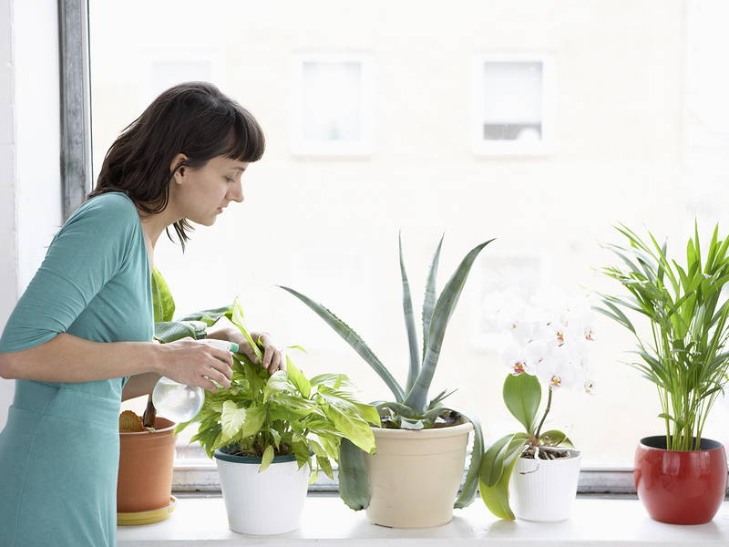 winter plant watering routine