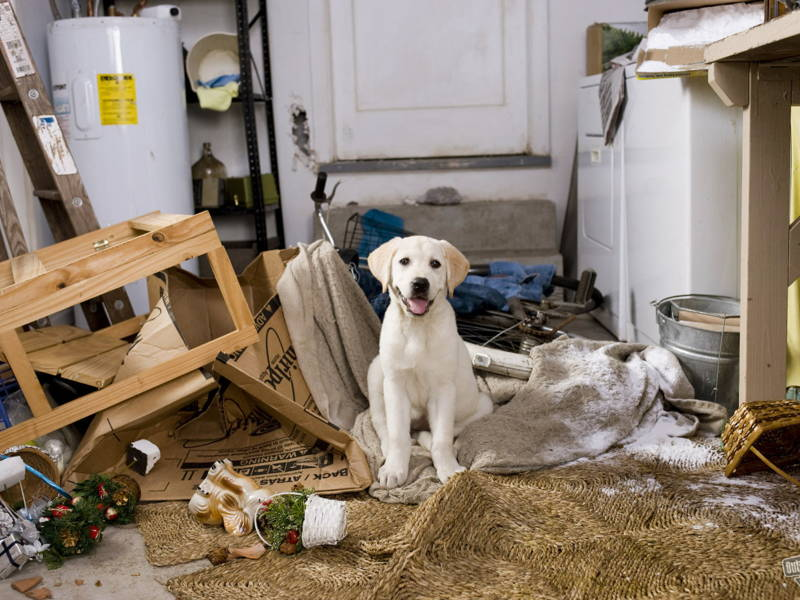 dog home mess