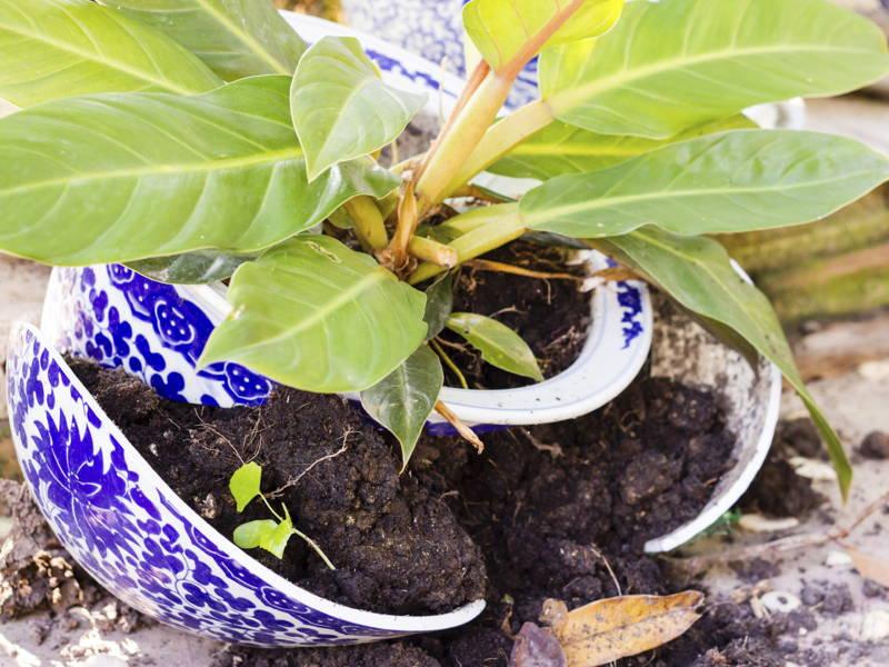 cracking pots winter