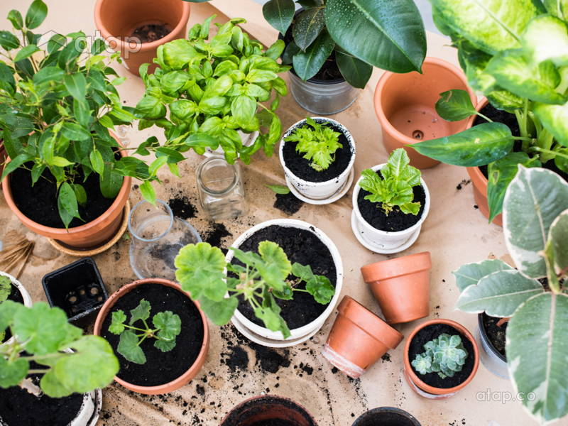 9 Indoor Plants You Can't Kill (So Easily)