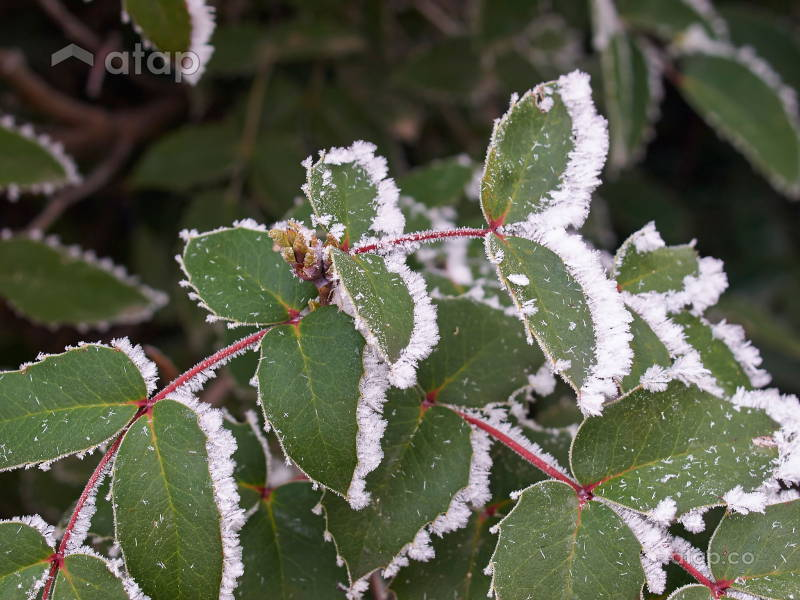 How Not to Kill Your Plants During Winter