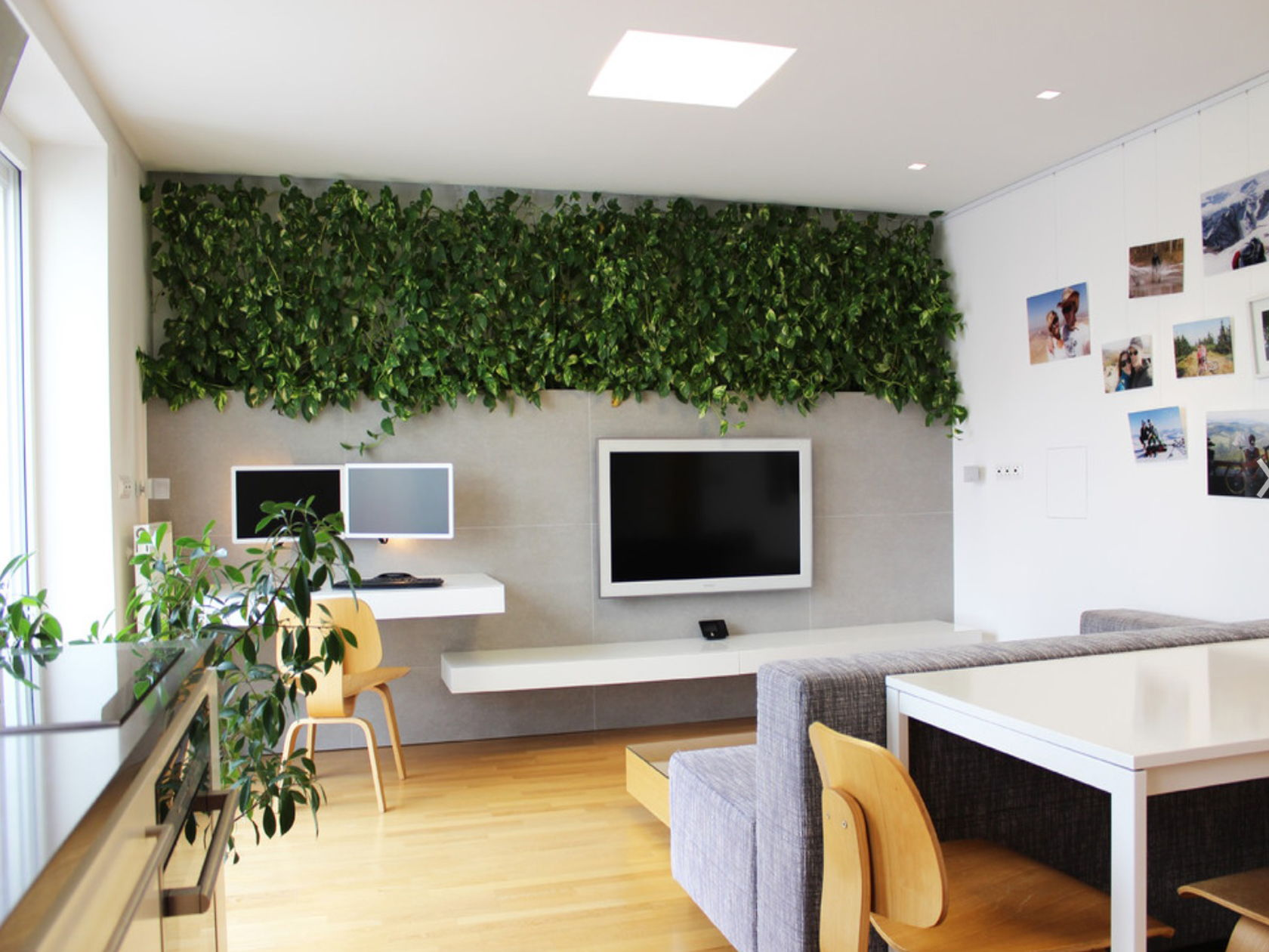 money plant office