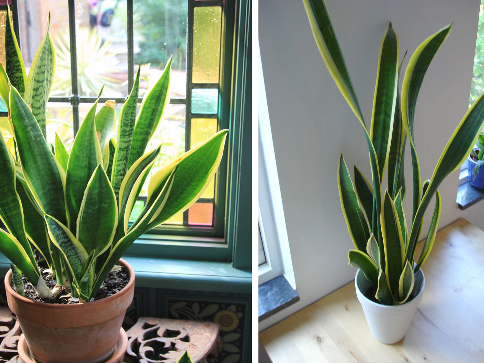 Easy Indoor Gardening Ideas Part - 15: 9 Indoor Plants You Cant Kill So Easily Atapco