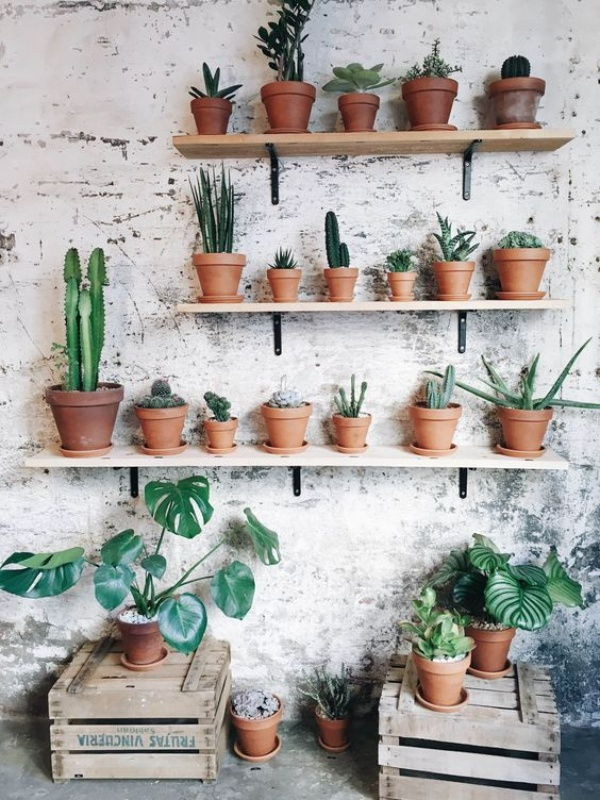 Outdoor cactus shelves