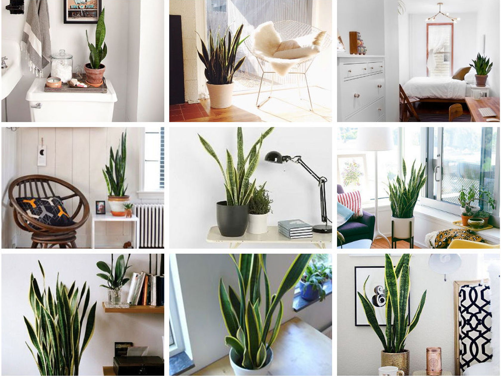 snake plant decor ideas