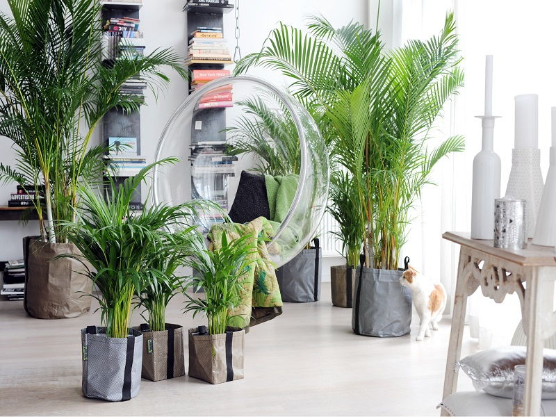areca palm home