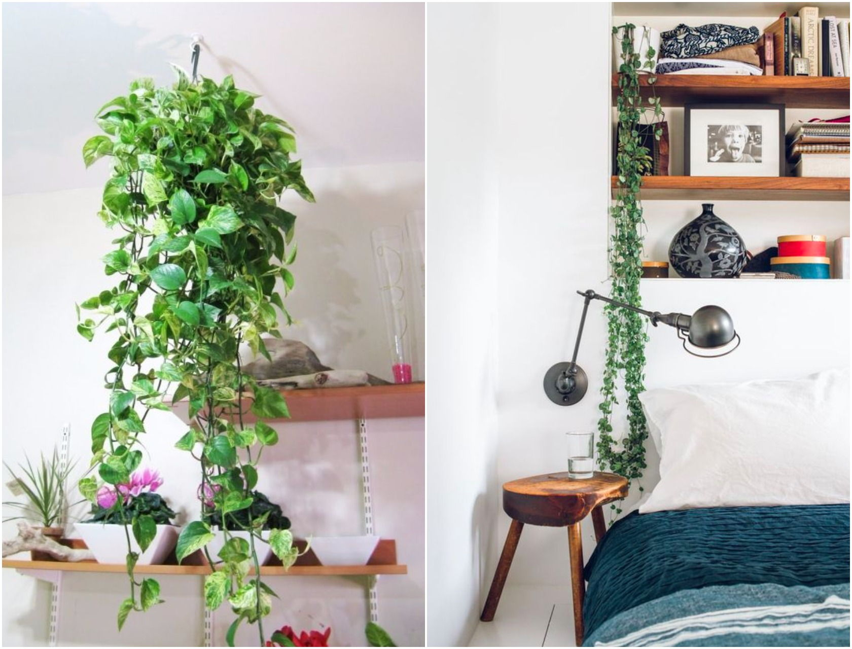 9 Indoor Plants You Can't Kill (So Easily) | Atap.co on st.lucia plants, persia plants, china's plants, sub saharan africa plants, hiroshima plants, montenegro plants, polynesia plants, australia northern territory plants, medically important plants, arabian peninsula plants, liechtenstein plants, middle colonies plants, himalayan region plants, britain plants, pohnpei plants, stacy plants, zambia plants, central china plants, ice land plants, mayotte plants,