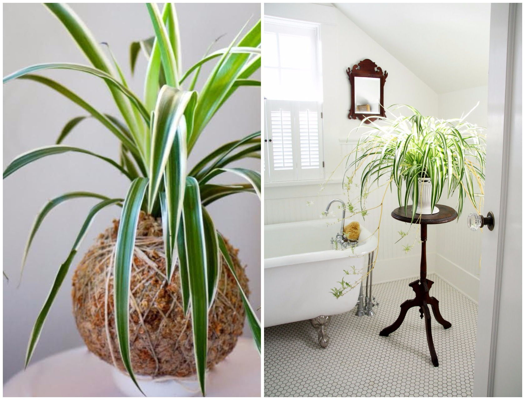 Top Of Cupboard Decor >> 9 Indoor Plants You Can't Kill (So Easily) | Atap.co