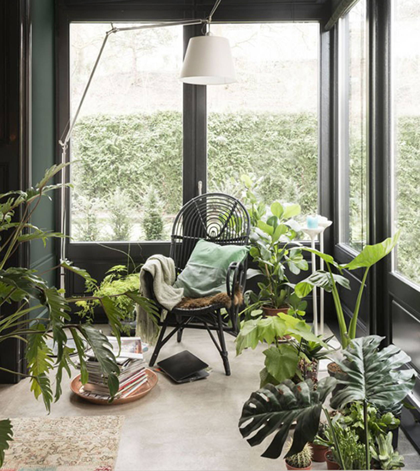 home interior greenery