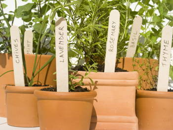 Save Money on Groceries by Growing These Edible Indoor Plants