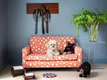 Convert These Secret Spaces at Home Into Doggy Dens