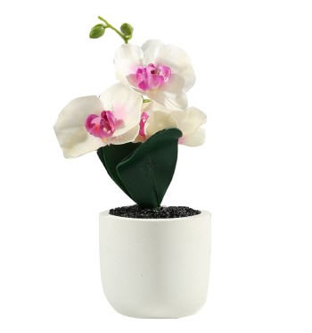 Botanica Orchid in Pot Small