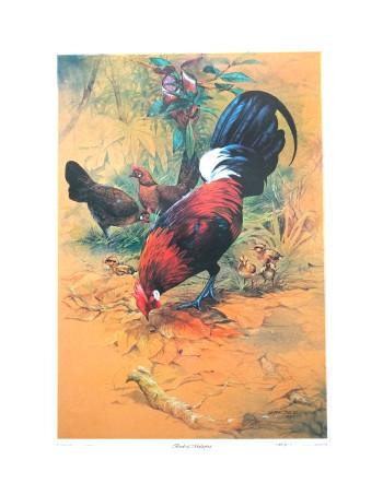 Red-Jungle Fowl