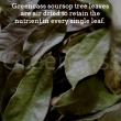 Greencass soursop premium tea sachets - Uniworco Enterprise