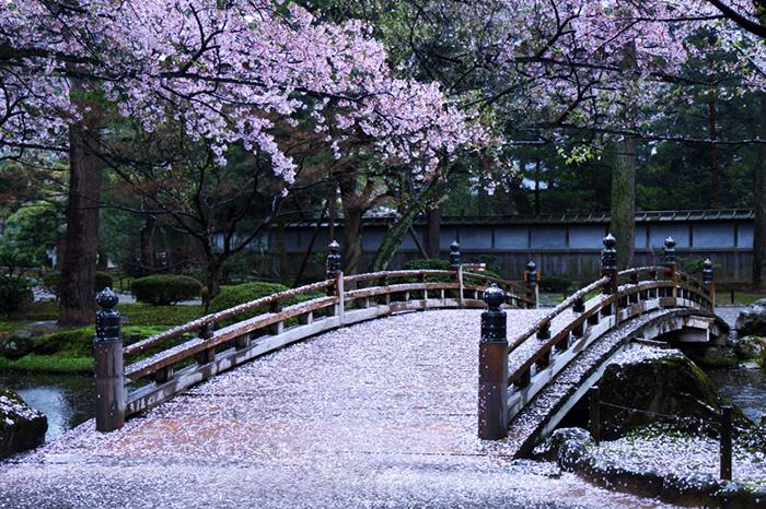 cherry-blossoms-japan-2019-Kenrokuen-Garden