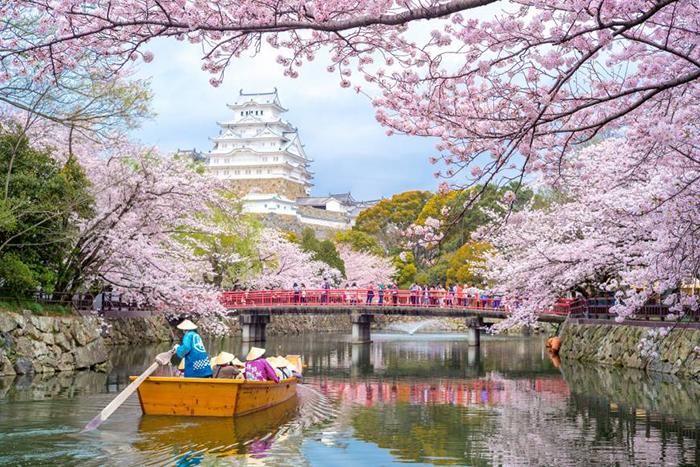 cherry-blossoms-japan-2019-himeji-castle