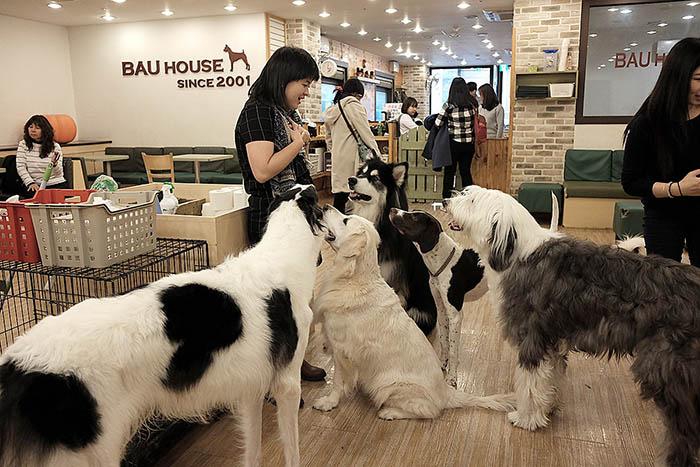 best-seoul-cafes-bau-house-dog-cafe