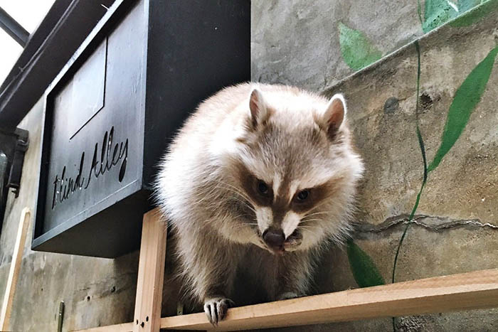 best-seoul-cafes-blind-alley-cafe