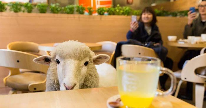 best-seoul-cafes-thanks-nature-cafe