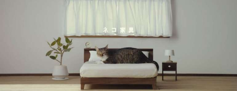 Miniature furniture for cats? This is what all cat-lovers have been dreaming of