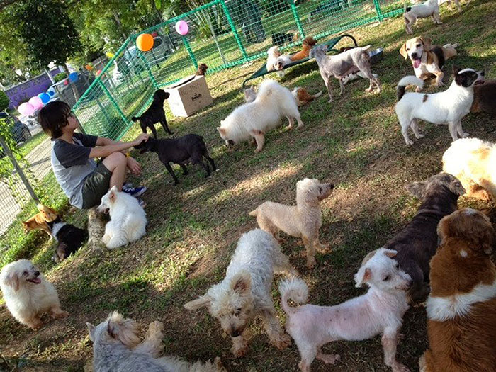 date-ideas-singapore-animal-shelter
